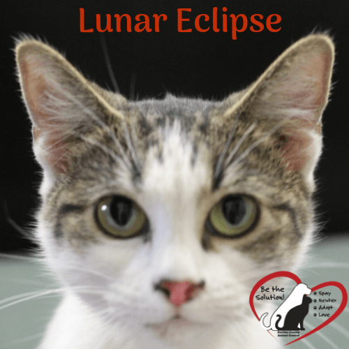 Lunar Eclipse 3955-3