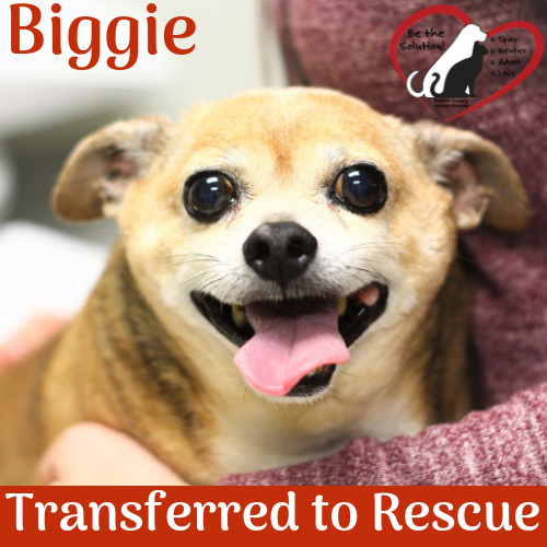 Biggie Rescue