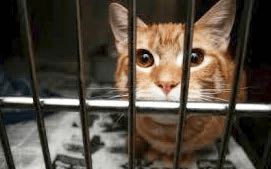Cat in Kennel
